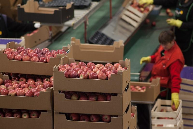 Select-fruit pakovanje