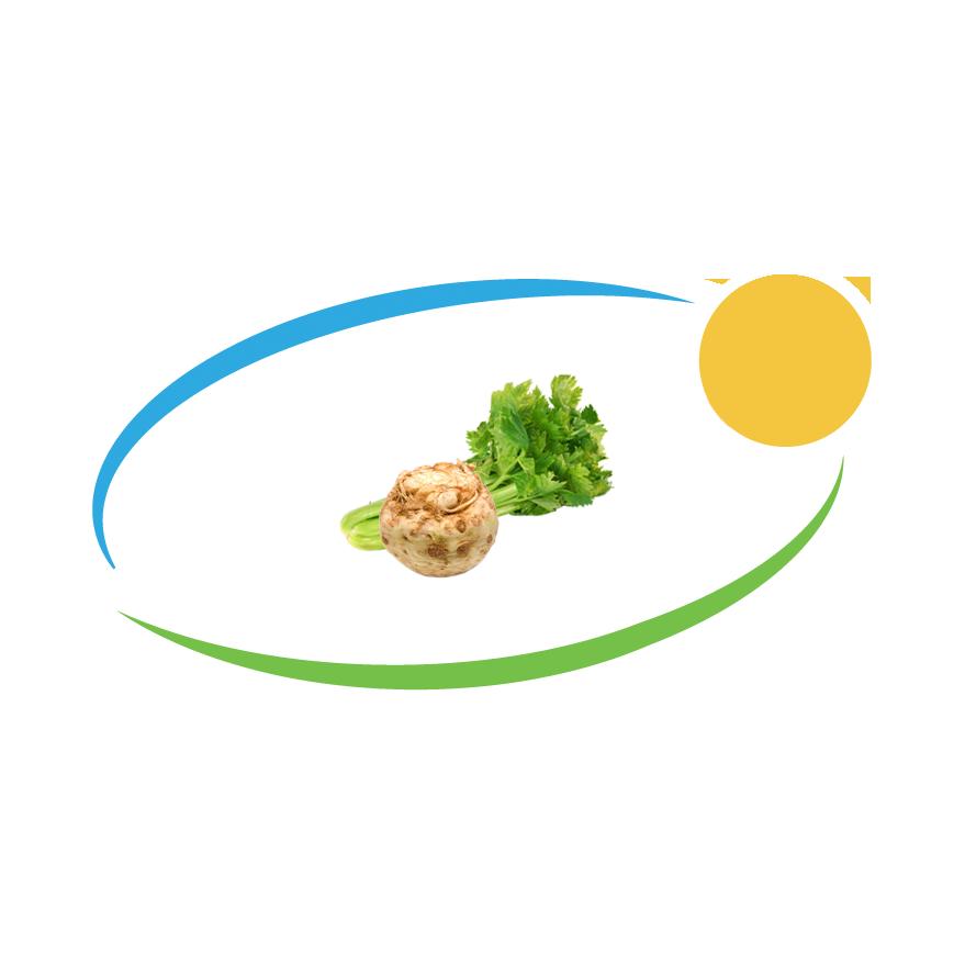 Celer koren i list