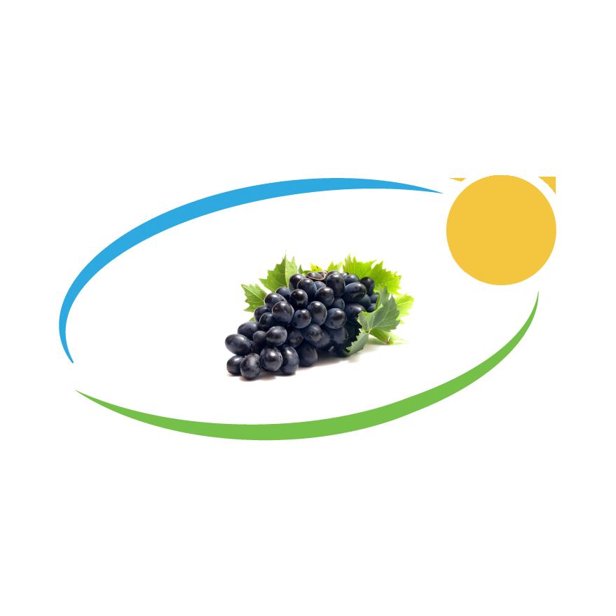 Crno grozdje